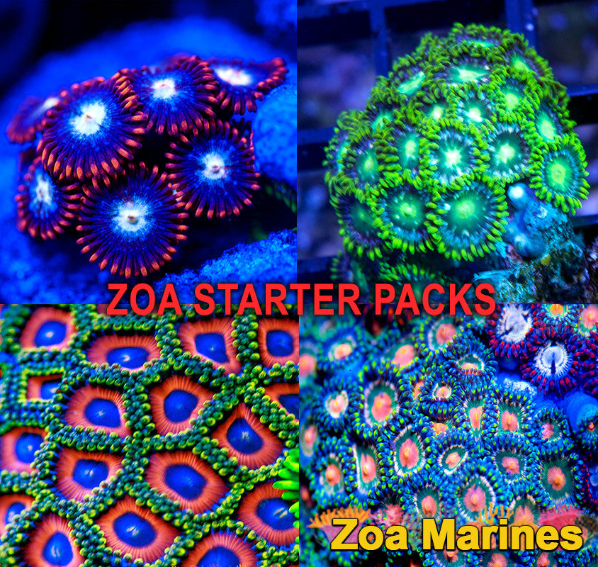 Zoa Bargain Starter Packs x4 Mixed Discs, 40++ Heads