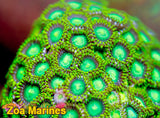 Zoa 'Radioactive Dragon Eyes' 10 or More Heads