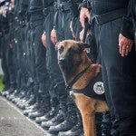 French Police Dog Hailed As Hero