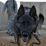 Honoring Our Combat Dogs on K9 Veterans Day