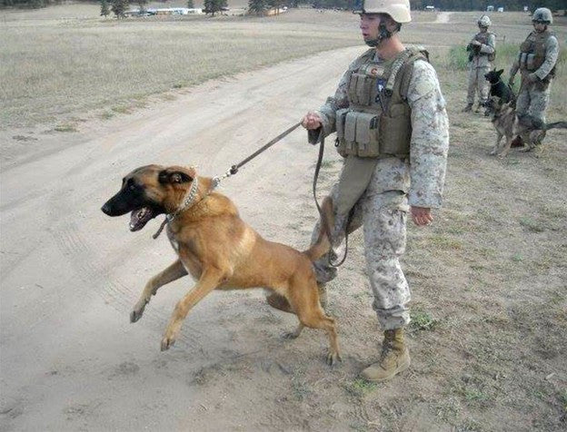 Video: Veteran With PTSD Reunited With Military Dog