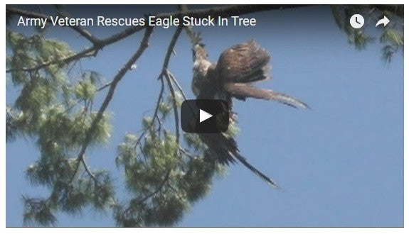 Army Veteran Saves Bald Eagle Stuck In Tree