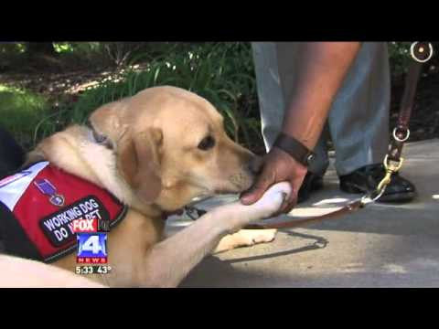Uproar Over Fake Service Dog Owners Scamming The System