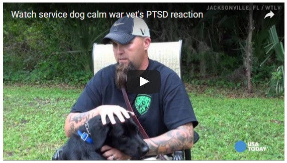 Service Animals Calm PTSD But VA Doesn't Agree