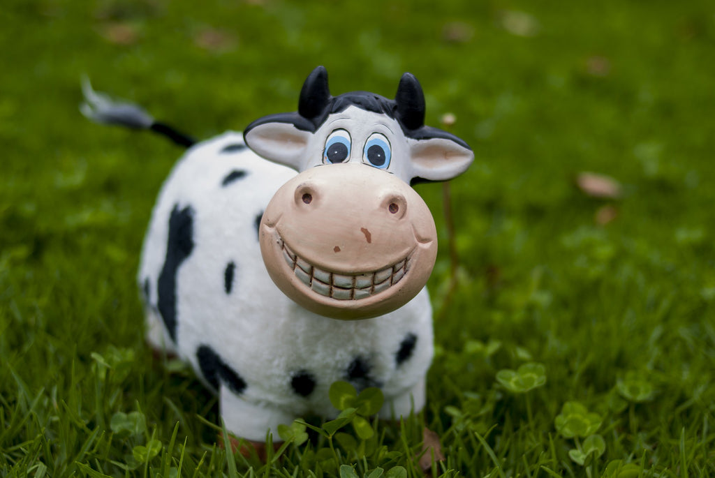 Grass Fed Cartoon Cow