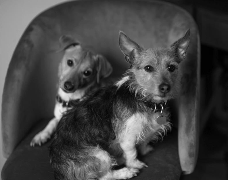 Poppy and Rufus