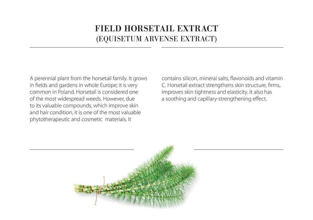 Field Horsetail Extract