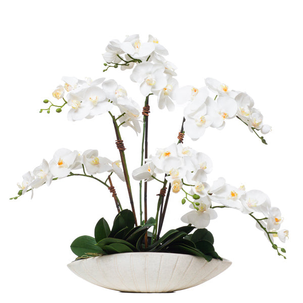 White Phalenopsis in Oval Bowl