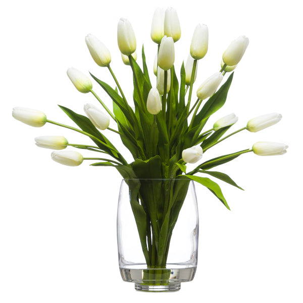 White Bud Tulips