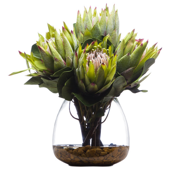 King Protea in Water