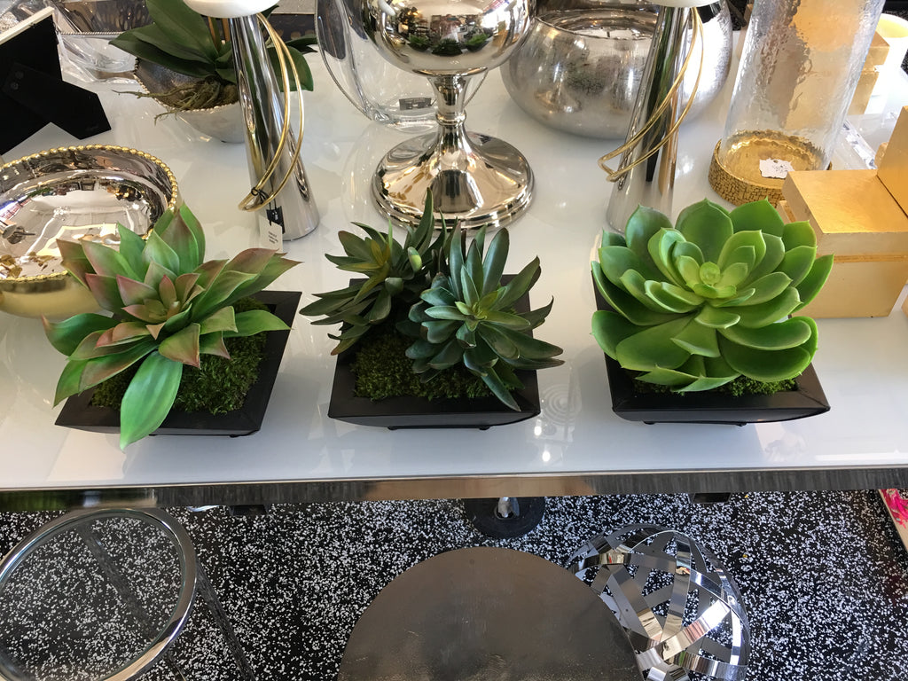 Succulents in Square Metal