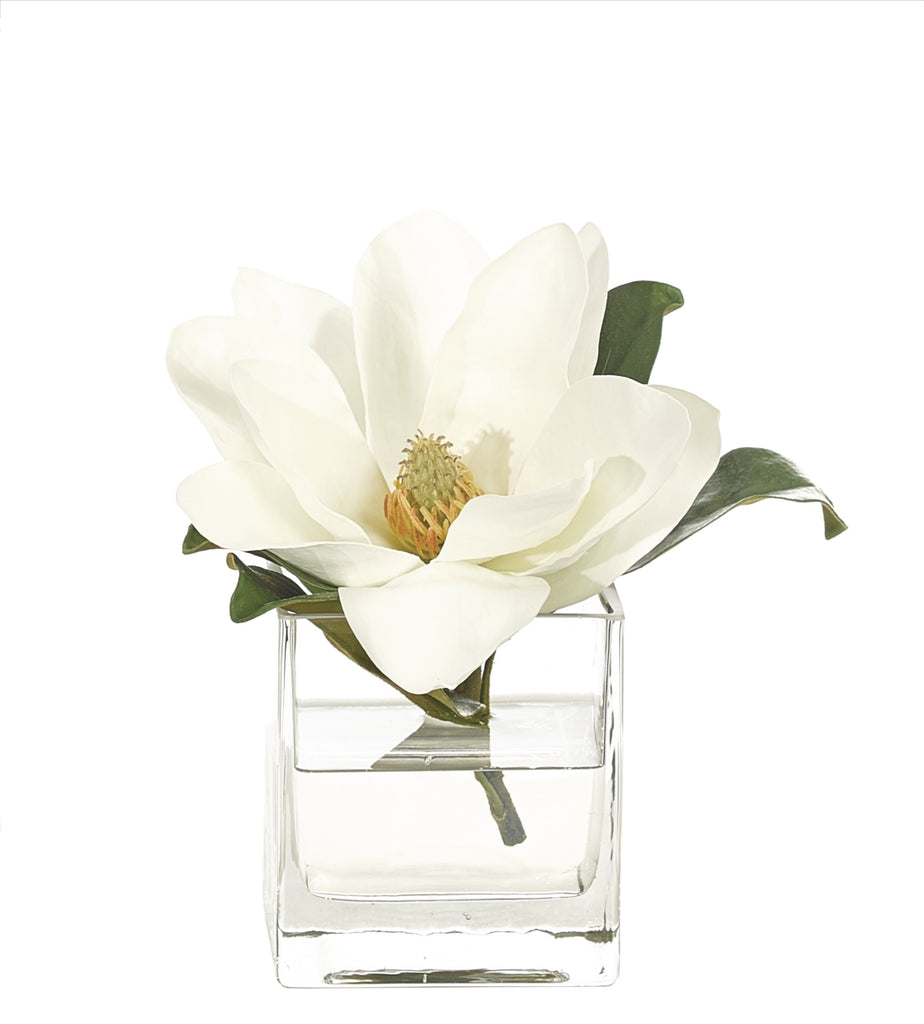 White Magnolia in Water