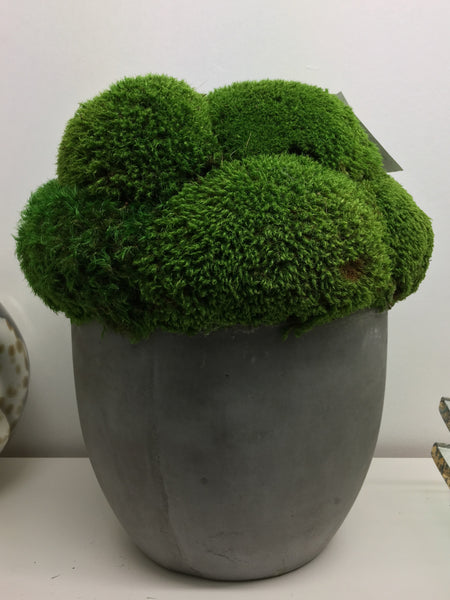 Mood Moss in Concrete Round