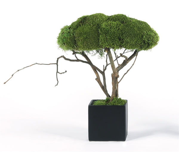 Modern Moss Table Topiary