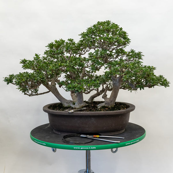 Bonsai Development Intensive (Reservation)