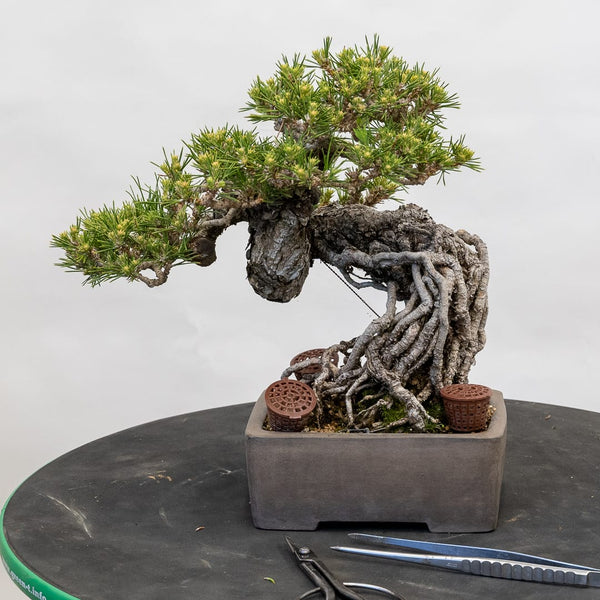 Workshop - Bring Your Own Tree
