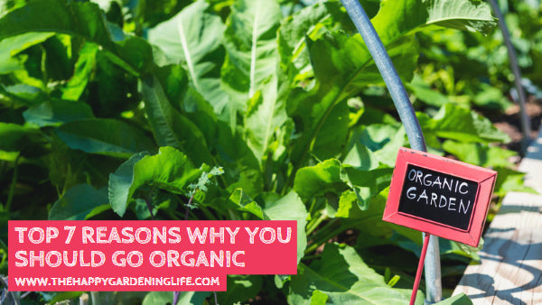 Top 7 Reasons Why You Should Go Organic