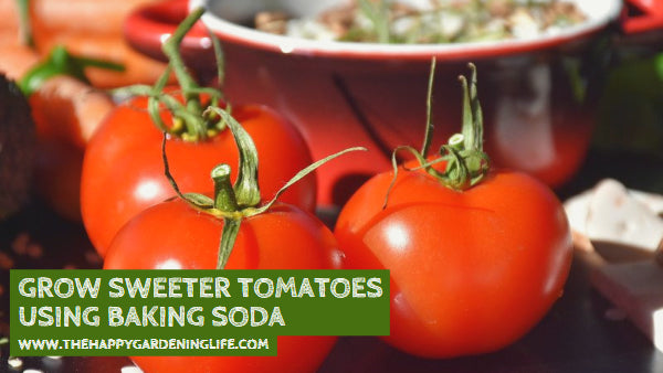 Grow Sweeter Tomatoes Using Baking Soda