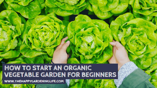 How to Start an Organic Vegetable Garden for Beginners