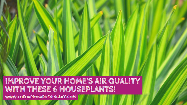 Improve Your Home's Air Quality With These 6 Houseplants!