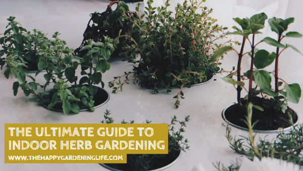The Ultimate Guide to Indoor Herb Gardening