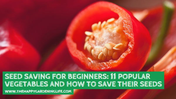 Seed Saving for Beginners: 11 Popular Vegetables and How to Save Their Seeds
