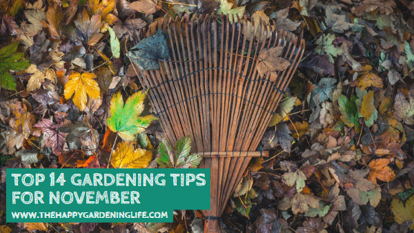 Top 14 Gardening Tips for November