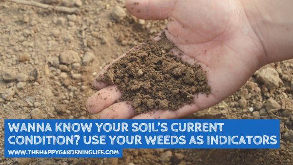 Wanna Know Your Soil's Current Condition? Use Your Weeds as Indicators