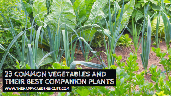 23 Common Vegetables and Their Best Companion Plants