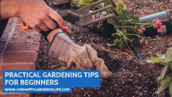 Practical Gardening Tips for Beginners
