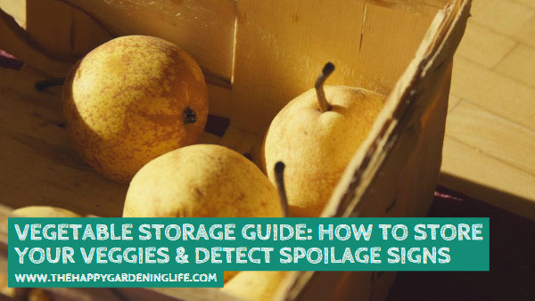 Vegetable Storage Guide: How to Store Your Veggies & Detect Spoilage Signs