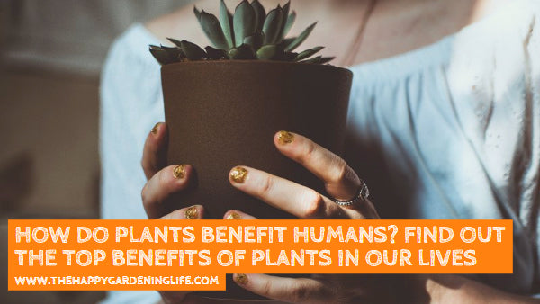 How Do Plants Benefit Humans? This Infographic Reveals the Top Benefits of Plants in Our Lives