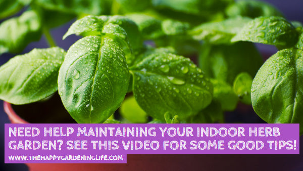 Need Help Maintaining Your Indoor Herb Garden? See This Video for Some Good Tips!