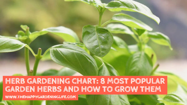Herb Gardening Chart: 8 Most Popular Garden Herbs and How to Grow Them