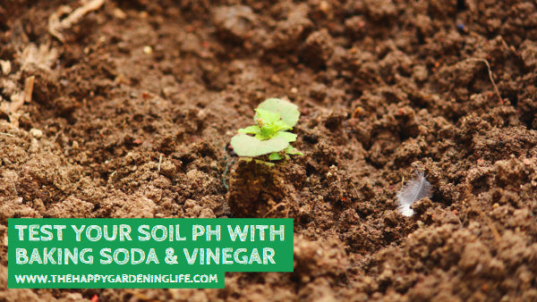Test Your Soil pH with Baking Soda & Vinegar