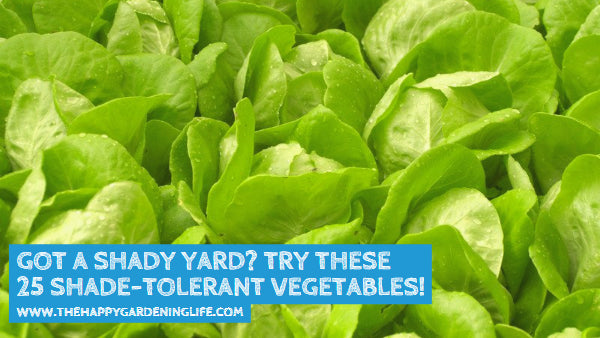 Got a Shady Yard? These 25 Shade-Tolerant Vegetables Will Grow Well in Your Garden!