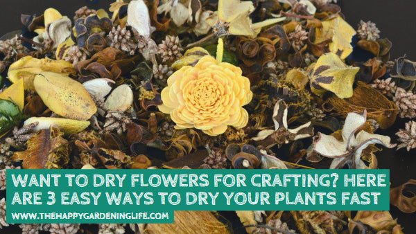 Want to Dry Flowers for Crafting? Here are 3 Easy Ways to Dry Your Plants Fast