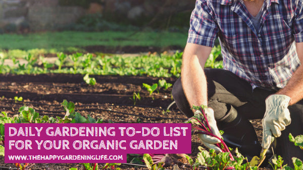 Daily Gardening To-Do List for Your Organic Garden