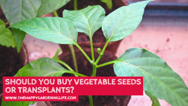 Should You Buy Vegetable Seeds or Transplants? Click Here to Find Out More!