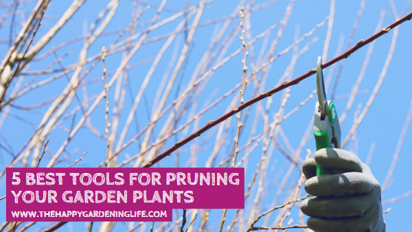 5 Best Tools for Pruning Your Garden Plants