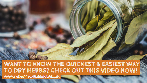 Want to Know the Quickest & Easiest Way to Dry Herbs? Check Out This Video Now!
