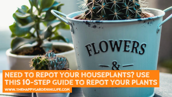 Need to Repot Your Houseplants? Use This 10-Step Guide to Repot Your Plants Properly!