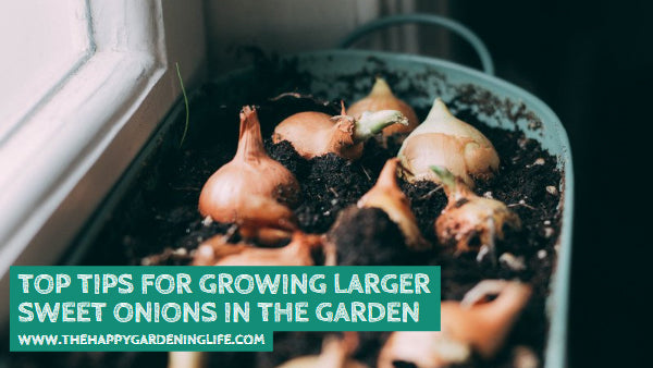 Top Tips for Growing Larger Sweet Onions in the Garden