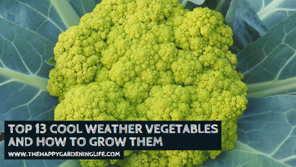 Top 13 Cool Weather Vegetables and How to Grow Them
