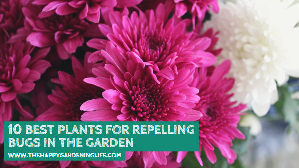 10 Best Plants for Repelling Bugs in the Garden