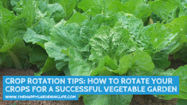 Crop Rotation Tips: How to Rotate Your Crops for a Successful Vegetable Garden