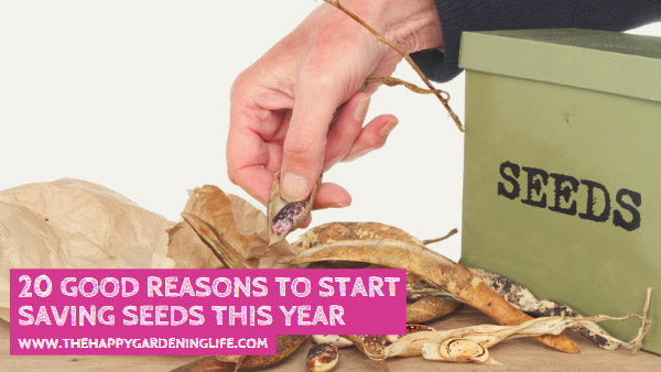 20 Good Reasons to Start Saving Seeds This Year