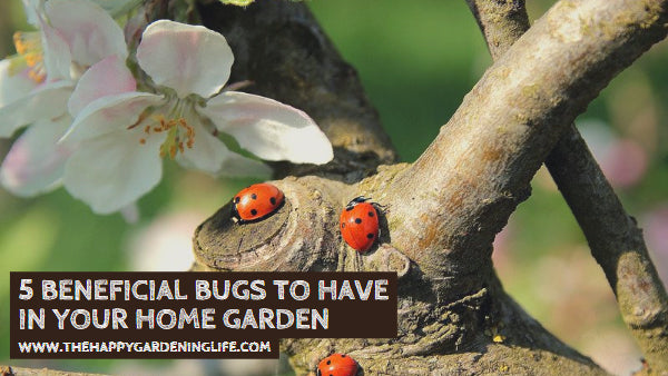 5 Beneficial Bugs to Have in Your Home Garden