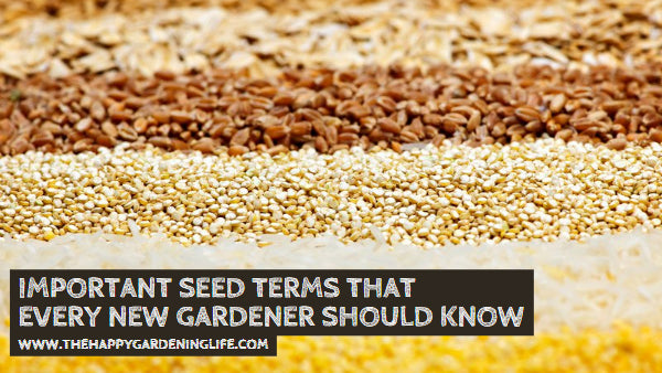 Important Seed Terms That Every New Gardener Should Know