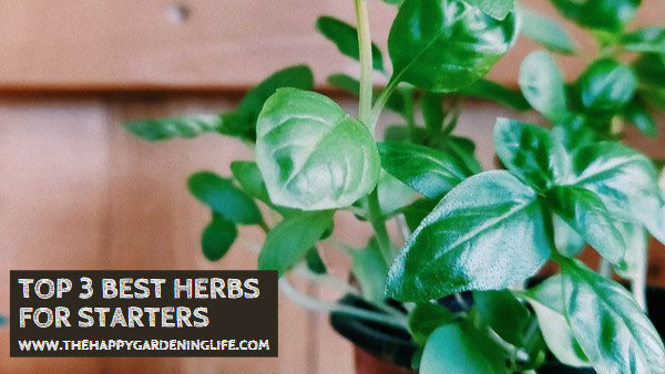 Top 3 Best Herbs for Starters